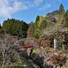 BIKE 90km 冠岳へ紅葉狩り