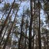 森のパワー