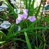 朝日の中に見つけた花