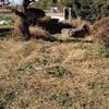 刈った草ゴミの行き先 くまねこを探せ