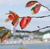 秋の聖崎公園