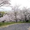 超田舎から桜風景をお届け🌸