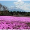 ゴールデンウィークに出かけるなら芝桜と富士山の絶景がおすすめ! 富士芝桜まつりへ行こう