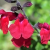 〔番外編〕コロナ禍の中、季節は春から初夏へ~花散歩