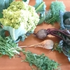 珍しいお野菜