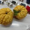 日本が柑橘に包まれた(^_^)/  2/17 軽専門店