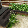 家庭菜園 野菜苗植付け