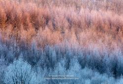 真冬の端野で出会う風景