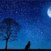 夢と現実の区別がつかない夜