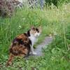タンポポと猫さん
