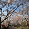鹿児島県伊佐市にある忠元公園で春を満喫