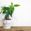 簡単風水で運気アップ!観葉植物を置こう!