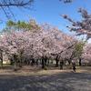 """大阪城の桜""""からの""""シェア農園週報(4/6)"""