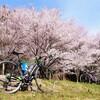 桜ガンガン咲いてる!ロードバイクが気持ちいい!!😍