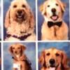 銃乱射の米高校の卒業アルバムに、セラピー犬も掲載