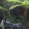 密林感がすごい。沖縄の林道、大国林道に行ってきました!