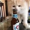 いただいたビール