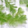(水草)カボンバ 金魚藻<30本>【水槽/熱帯魚/観賞魚/飼育】【生体】【通販/販売】【アクアリウム】