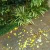 濡れ落ち葉。