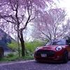 桜×MINI