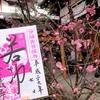 若冲ドクロ御朱印が復活 京都・宝蔵寺
