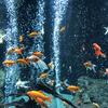 チンチラ、アロワナ、フクロウ、チョウと多様な生き物たちと出会える「足立区生物園」