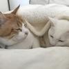 猫さんに添い寝してもらえる幸せ