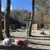 1月最後の日、白州べるがの森でお散歩