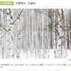 白樺林が売れた!