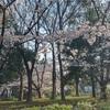 ☀︎ 夢の島公園と赤札堂の値引き商品