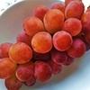 ルビーオクヤマ【9月が旬の果物】*ぶどう
