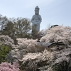 高崎観音山へ花見に行ってきました