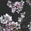 2020年 4月のメッセージ 担当:櫻井 由史
