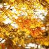 紅葉と伊三松