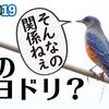 0919【鳴くイソヒヨドリのオス】小魚がカワセミに食べられる。カルガモコガモにシジュウカラの鳴き声ツピツピ、ギンヤンマの産卵【今日撮り野鳥動画まとめ】 #身近な生き物語