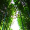 竹原伸びて 空の垣根を越えるまで