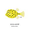 幼魚は黄色に黒のドット柄のミナミハコフグさん