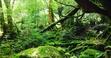 【離島の旅行記】世界自然遺産 屋久島の観光・フェリー・天気など解説