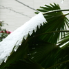 3月29日関東雪