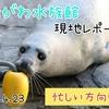 【レポ#22.5】しながわ水族館(2021/4/23)の見どころまとめ