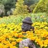 済州島(チェジュ島)フォトスポット #マリーゴールド祭り「上孝園」