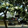 東寺・冬の花