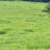 物語のなかのような「タデ原湿原」