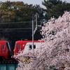 03/31 岡崎 桜