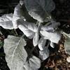 真冬の庭の植物たちが健気だ。