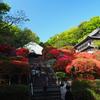 つつじが見頃の「神木山 等覚院」に行って来た。