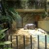 今年2回目の上野動物園 カバ編