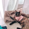 【猫】ちょこちゃん流食いつきの悪いドライフードの食べさせ方。