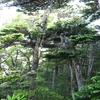 木へんの読めなかった漢字3つ