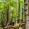 新緑…原生林の森を歩く…